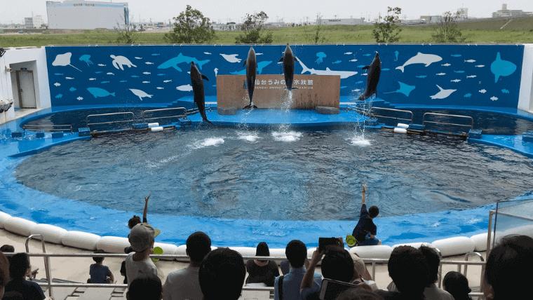 仙台うみの杜水族館のイルカのショーは迫力あり