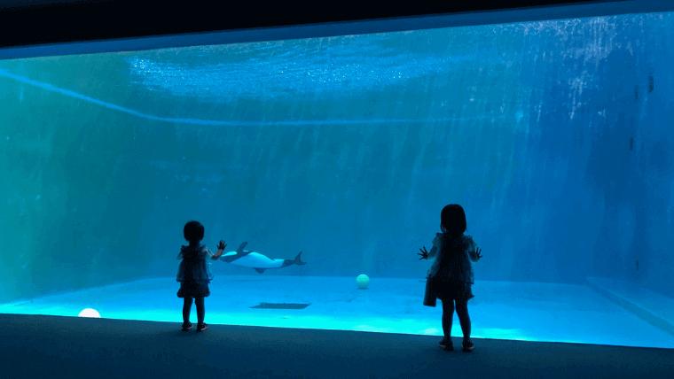 幻想的な水槽に照らされるわが子を眺め満足する筆者