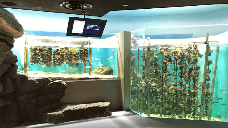 自然に模した形での海藻や貝類の展示が多く、楽しめる