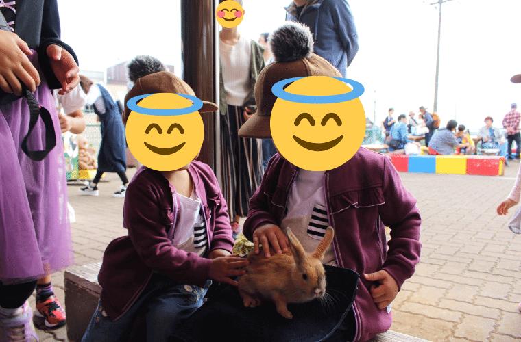 かみね動物園のふれあい広場(うさぎ)