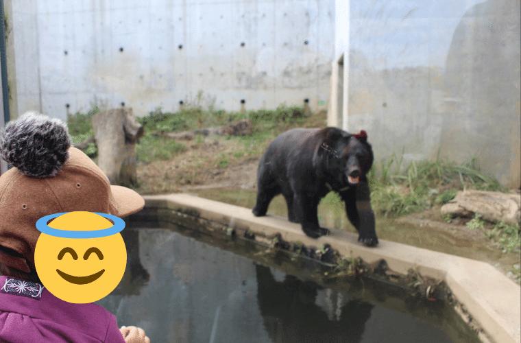 かみね動物園のクマ